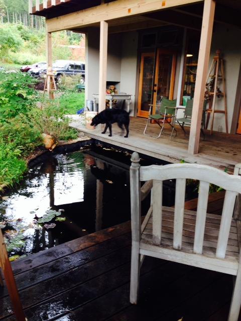 池とニコル